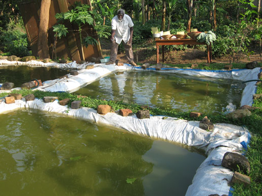 پوکه معدنی جهت پرورش ماهی