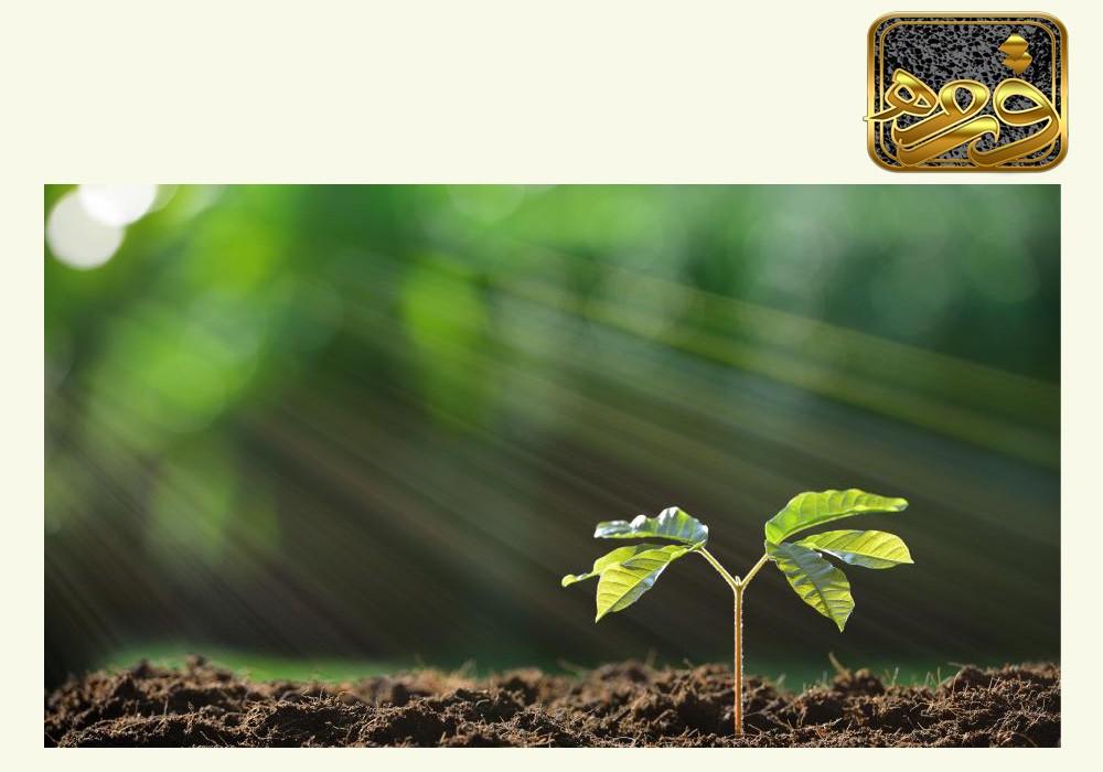 کاربرد سنگ لیکا در کشاورزی