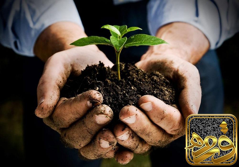 کاربرد اسکوریا در کشاورزی